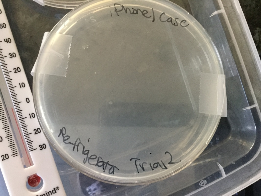 Bacterial Growth At Room Temperature